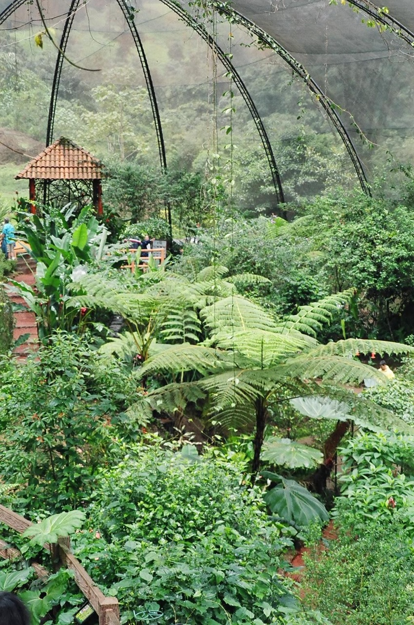 butterfly_pavilion_Costa_Rica